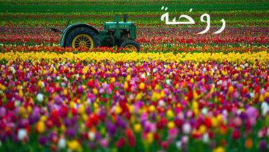 Photo of معنى اسم روضة و ميزته (مذكور في القران الكريم)