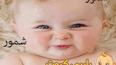 Photo of معنى اسم شمور و هل هو اسم عربي أم عبري ؟