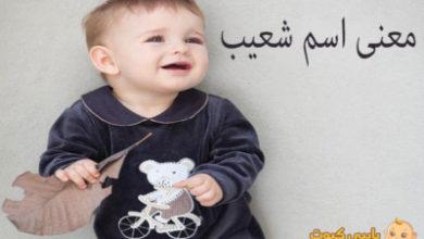 Photo of معنى اسم شعيب